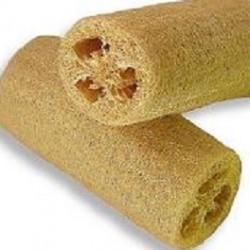 Luffa cylindrica COURGE ÉPONGE VÉGÉTALE (10 graines)