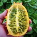 Cucumis metuliferus HORNED MELON (15 seeds)