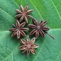 Illicium verum ANIS ESTRELLADO, BADIANA (5 semillas)