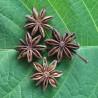 star-anise-seeds