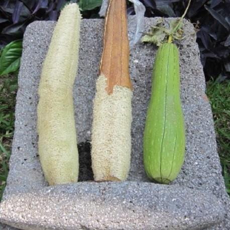 Calabaza Esponja Vegetal Semillas De Luffa Para Comprar