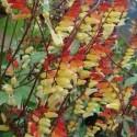 plantas America del norte