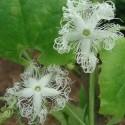 Les plantes insolites