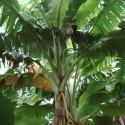 Exotischen pflanzen