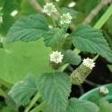Otras plantas medicinales