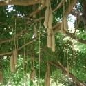 Les plantes d'Afrique